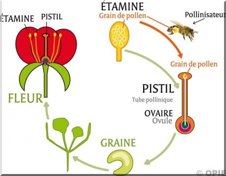Produits ruche - Qu est ce qui fait fuir les abeilles ...